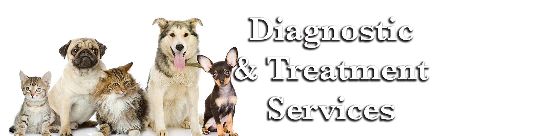 Diagnostic & Treatment Services